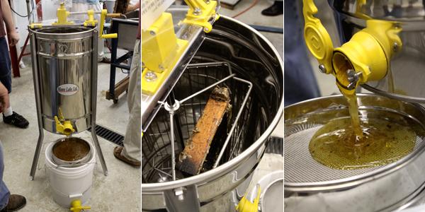 extrayendo miel