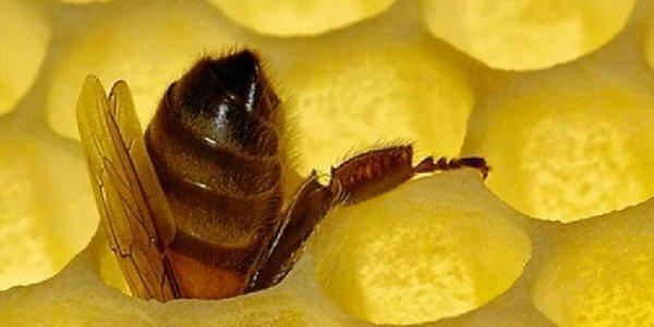 abeja en colmena miel