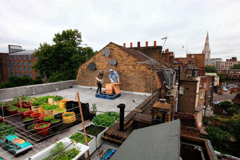 apicultura urbana para obtener miel