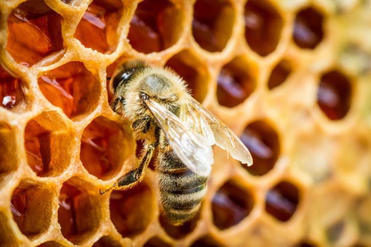 elaboración de la miel por las abejas