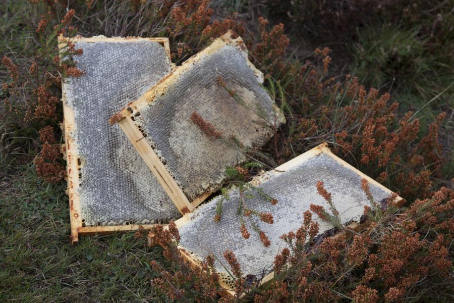 elaboración miel de brezo artesanal
