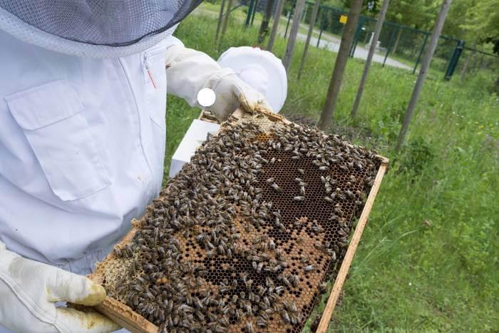 extracción de miel de panal