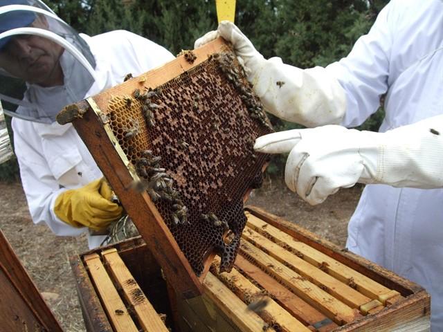 apicultura extraer miel