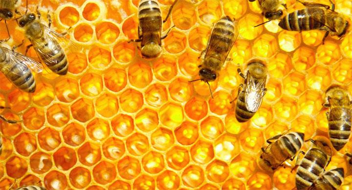 panal de abejas miel