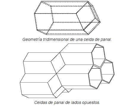 forma de un panal de abejas celdillas